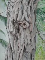 Close  Up Arboretum Ottawa